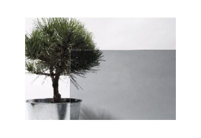 Gray tinted glass (4mm)